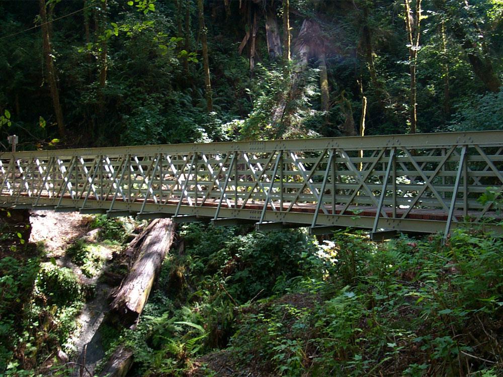 Redwoods 80